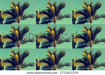 Pattern of palm trees at tropical coast in island. Vintage style picture.