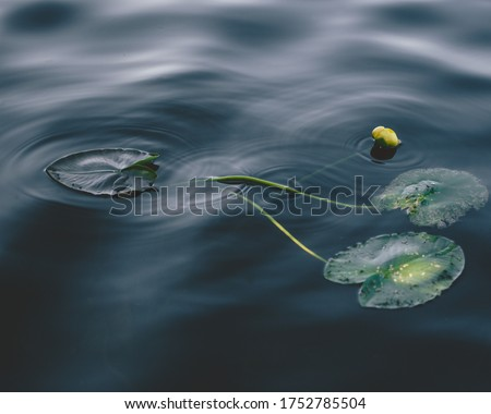 Lily pads In The Water With Ripple Motion Of The Water  #1752785504