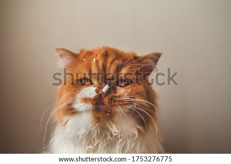 Angry ginger cat with a dirty face. Sour cream on the face of a cat. Royalty-Free Stock Photo #1753276775