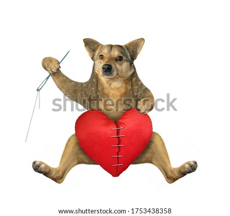 The beige dog with a needle and sewing thread is mending in a big red broken heart. White background. Isolated.