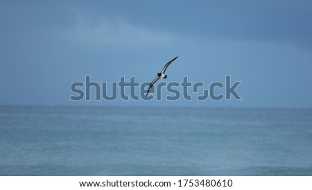 Flying Bird over the sea #1753480610