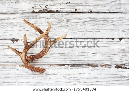 Real white tail deer antlers over a rustic wooden table. These are used by hunters when hunting to rattle in other large bucks. Free space for text. Top view.