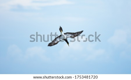 Flying Bird diving on the sea #1753481720