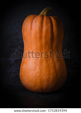 Pumpkin on dark background. Pumpkin in dark mood. Low key picture.