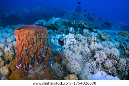 Bleaching Corals Environment Undersea Tropical Ocean - Stony Hard Scleractinian turns White Color. No Microscopic Algae Zooxanthellae in Polyps Tissue. No Zooplankton. World Marine Life Conservation.