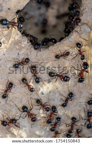 Ant Family. Ants. Macro photo. Mink in the ground. Ants are working. Production. Ants at the entrance to the termite mound. The texture of clay and small stones. Royalty-Free Stock Photo #1754150843