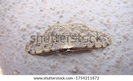 moth | close up | closeup amazing camouflage moth white moth isolated moth on white background insects, insect, bug, bugs, animal, animals, wildlife, wild nature, forest, woods, garden, micro monster #1754211872