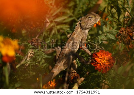 A Indian reptile picture in the garden