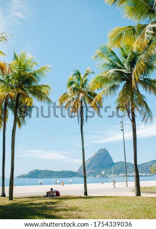 beautiful picture of flamingo beach overlooking mount sugar loaf and local brazilian atmosphere with palm trees