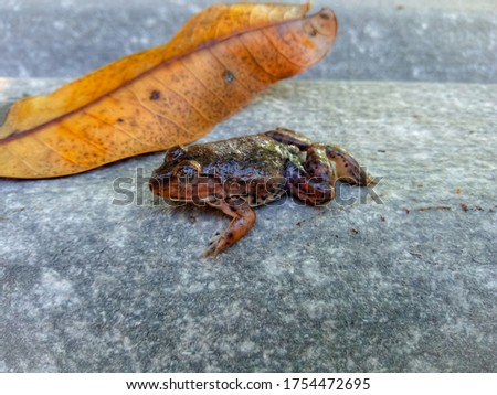 One small frog perched near one dry leaf. #1754472695