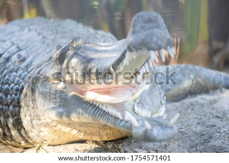 Picture of a crocodile mouth closeup with throat view