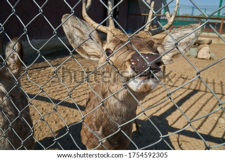 Deer in the zoo behind bars. Wild animal out of control. Lama. Elk. High quality photo