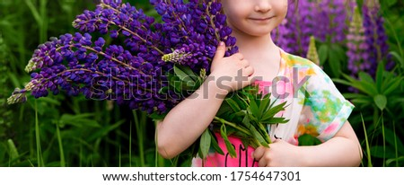 banner. hands of a kid girl who holds a large bouquet of purple lupins in nature.