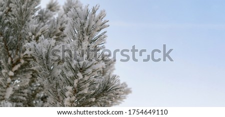 Fir branch in snow. Green tree, white crystals of frozen water. Background is the sky. New Year, Christmas holiday concept. Selective focus. #1754649110