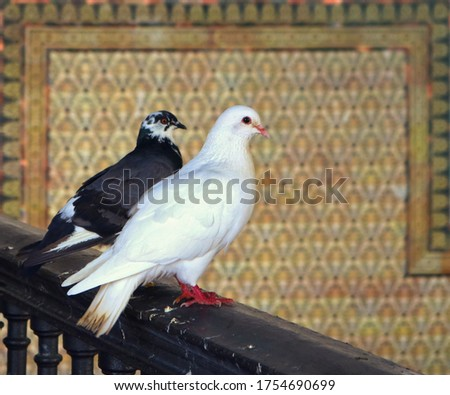 two birds, a white dove and a black pigeon, standing in an interior railing with ornaments in the background framing them - beautiful couple #1754690699