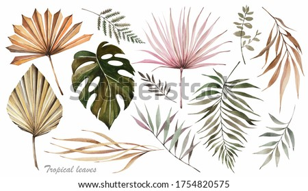 Dried palm leaves. Watercolor illustration. Tropical leaves.