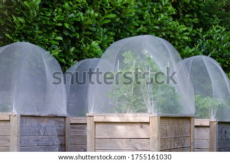 Group of raised beds in a garden. Covers protect plants against pest. Sugar snap pees and strawberries grow in the beds. Royalty-Free Stock Photo #1755161030