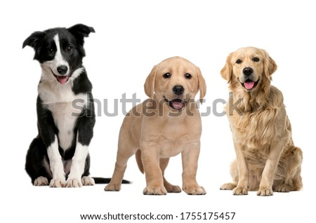 Three Dogs picture with white background