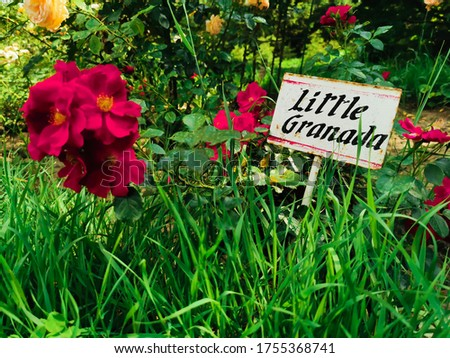Colorful garden with many flowers - little Granada