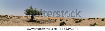 Ghaf trees (Prosopis cineraria) in the arid desert sand dunes of the United Arab Emirates where it is the national tree. The tree is also native to Oman, Saudi Arabia, Bahrain, Iran, Pakistan, India. Royalty-Free Stock Photo #1755393104