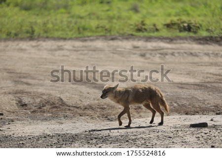 A picture of Serengeti's natural wildlife in Africa