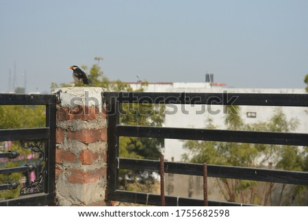 a bird on rooftop black bird on roof a village pic