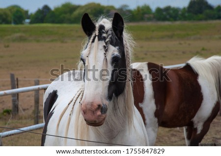 Close up of a horse. It's white and black and got pigtails! How lovely this mature horse looks like. Great black eyes are wondering what we see. A nice background this picture good be.