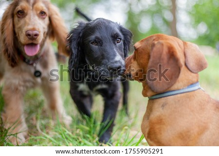Puppies playing together in doggy day dare Royalty-Free Stock Photo #1755905291