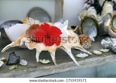 Beautiful sea shell with a tropical flower. Wonderful and nice composition tropical items. Tropical still photo. #1755919571