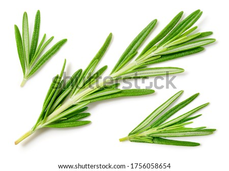 Rosemary isolated on white background. Top view rosemary twig set. Green herbs isolated on white. #1756058654
