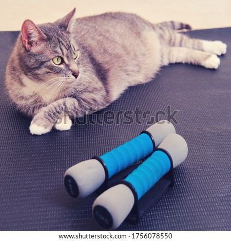 A gray cat lies on a sports mat next to dumbbells. The concept of fitness training and yoga in the epidemic of coronavirus.