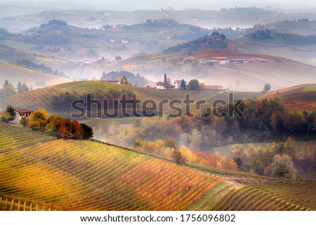 Sunrise on Barolo lands and fog in Langhe Region, Piemonte Piedmont. Unesco World Heritage site in Northern Italy. Agriculture Vineyards and Wine production. #1756096802