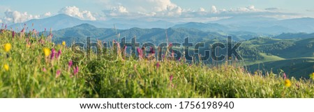 Blurred grass and flowers in the foreground. Blue haze in the mountains, sunny day. Spring landscape. Panoramic view. Royalty-Free Stock Photo #1756198940