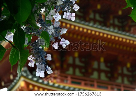 A picture of a five-storied pagoda with soft focus on the back of A picture of a five-storied pagoda with soft focus on the back of Forehead hydrangea with white decorative flowers