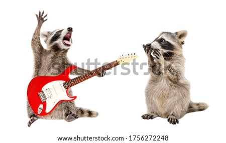 Surprised raccoon looking at a raccoon playing on electric guitar isolated on white background Royalty-Free Stock Photo #1756272248