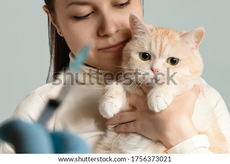 A young girl with a cute cream cat at the vet is preparing to be vaccinated