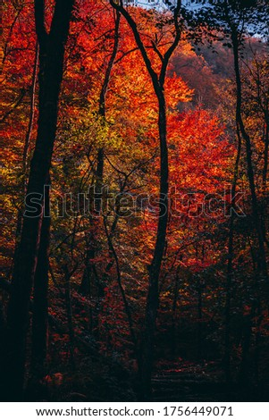 Autumn Fall Pictures Forest Colors Red Yellow Orange Leaves, Leaf, Tree