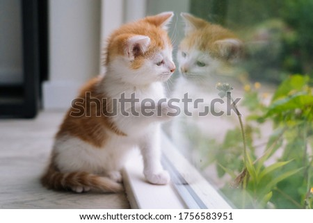 Cute little red cat sit on wooden floor near window. Young little red kitty looking at its reflection in window  Royalty-Free Stock Photo #1756583951