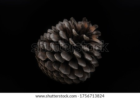 Isolated pictures of pinecones with black background. Royalty-Free Stock Photo #1756713824