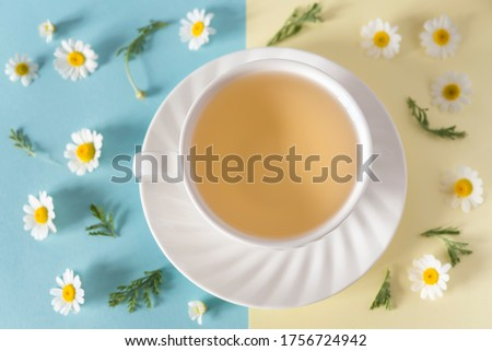 White cup of camomile tea on the saucer and beautifully laid out flowers and leaves of camomile on the blue and yellow background. Flat lay. Top view. Bright image
