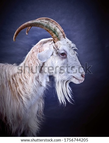 Goat creative art, colored background