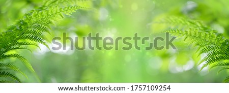 nature background with green fern leaves. pure wild nature, environment, ecology concept. summer forest. copy space. banner. Royalty-Free Stock Photo #1757109254