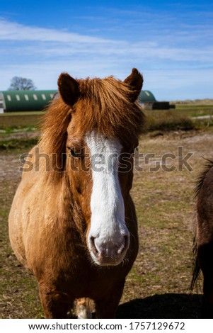 A beautiful young sorrel horse with a white stripe between the eyes in a farm #1757129672