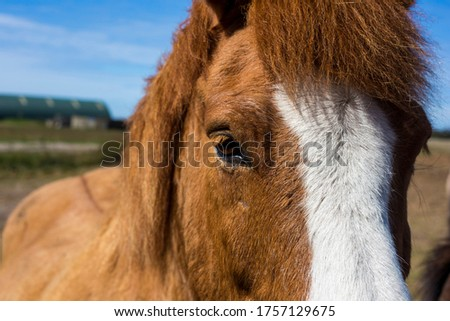 A beautiful young sorrel horse with a white stripe between the eyes in a farm #1757129675