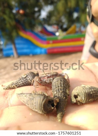 Cute closeup picture of seashells and a cute crab on a palm at a beautiful beach with a lovely scenery in Malaysia
