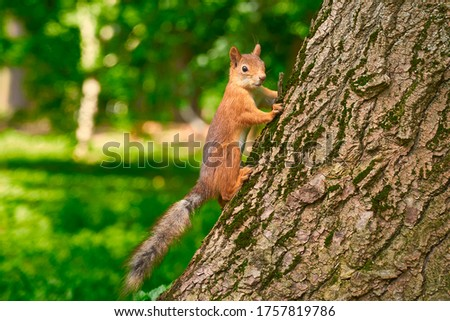 Squirrel in the park on the tree