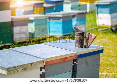 Colourful hives of bees on a meadow in summer. Hives in an apiary with bees flying to the landing boards. Apiculture. Bee smoker on hive.