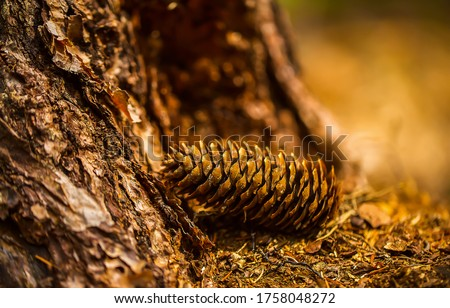 Pine cone macro view. Pine cone close up. Pine cone in forest. Pine cone Royalty-Free Stock Photo #1758048272