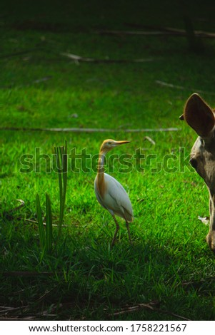 nature pics the bird and cow eating there food at same place