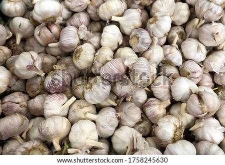Macro Photo food garlic bulb. Background texture Plant vegetable garlic. #1758245630